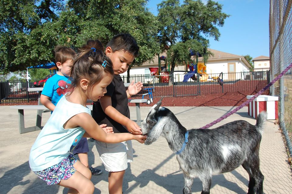 children playing with goat outside at a Preschool & Daycare Serving San Antonio, TX